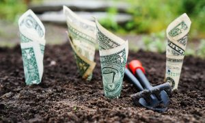 planing money in the garden to make it grow investment analogy
